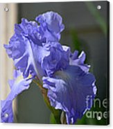 Purple Beauty Iris Acrylic Print
