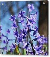 Purple Bell Acrylic Print
