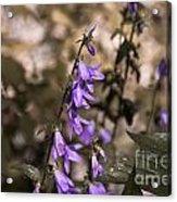 Purple Bells Acrylic Print
