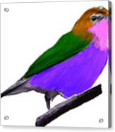 Purple Belly Warbler Acrylic Print