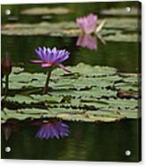 Purple Blossoms Floating Acrylic Print