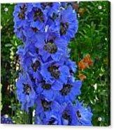 Purple Blue Acrylic Print