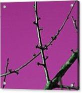 Purple Branches Acrylic Print