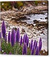 Purple California Coastline Acrylic Print