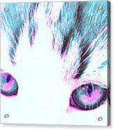Purple Cat Eyes Acrylic Print