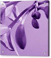 Purple Charm Acrylic Print
