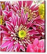 Purple Chrysanthemum Acrylic Print