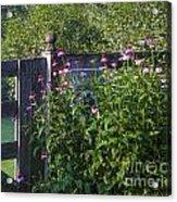 Purple Coneflower Acrylic Print