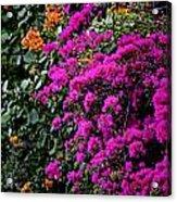 Purple Contrast Acrylic Print