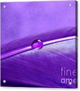 Purple Daydream Acrylic Print