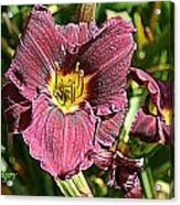 Purple Acrylic Print by Debbie Sikes