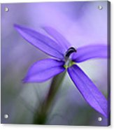 Purple Dreams Acrylic Print