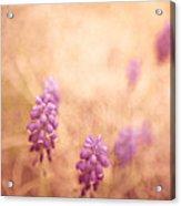 Purple Dreamy Acrylic Print