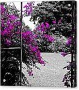 Purple Entrance Acrylic Print