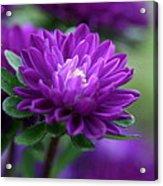 Purple Escape  Acrylic Print