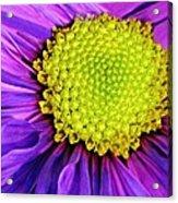 Purple Fantasy Acrylic Print