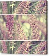 Purple Fields Acrylic Print