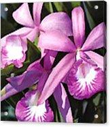 Purple Flock Of Cattleya Orchids Acrylic Print
