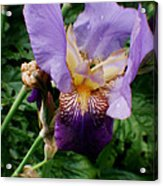 Purple Flower After Rainfall Acrylic Print by Doc Braham