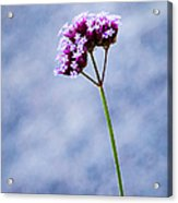 Purple Flower Acrylic Print