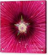 Purple Flower Extreme Macro Acrylic Print