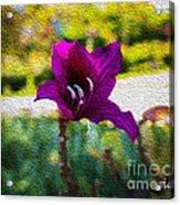 Purple Flower In Oil Acrylic Print
