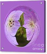 Purple Flower Orb Acrylic Print
