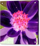 Purple Flower - Photopower 257 Acrylic Print