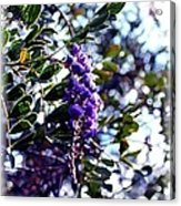 Purple Flowering Tree Acrylic Print