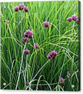 Purple Flowers And Grasses Acrylic Print