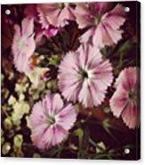 #purple #flowers #ihavenoclue #pretty Acrylic Print