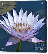 Purple Glory Acrylic Print