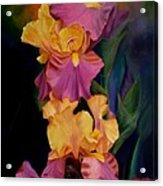 Purple Gold Irises  Acrylic Print