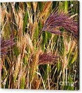 Purple Grasses Acrylic Print