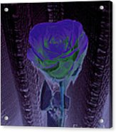Purple Green Dark Rose Acrylic Print