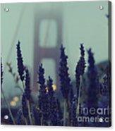 Purple Haze Daze Acrylic Print