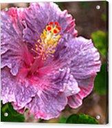 Purple Hibiscus Acrylic Print