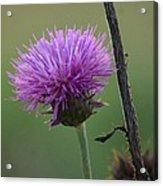 Purple In Nature Acrylic Print