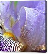 Purple Iris - 3 Acrylic Print
