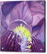 Georgia O'keeffe Style-purple Iris Acrylic Print