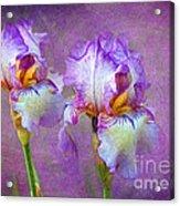 Purple Iris Acrylic Print by Lena Auxier