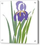 Purple Iris Stylized Acrylic Print