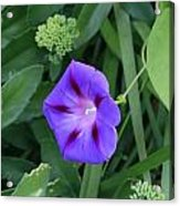 Blume-bestaubung Acrylic Print