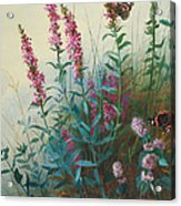 Purple Loosestrife And Watermind Acrylic Print