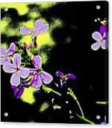 Purple Magic Acrylic Print