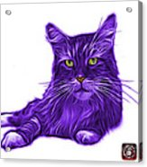 Purple Maine Coon Cat - 3926 - Wb Acrylic Print