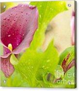 Purple Mini Calla Lily On A Sea Of Green Acrylic Print