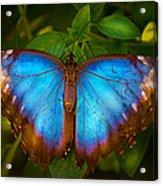 Purple Morpho Butterfly Acrylic Print