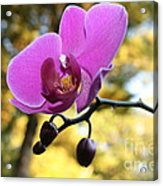 Purple Orchid In September Sun Acrylic Print