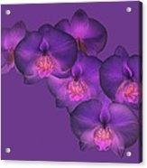 Purple Orchid On Purple Acrylic Print